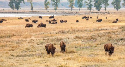 Wildlife grazing the lands of Cody in May
